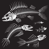 Evil Fish Sceleton Collection. White skeletons of fishes on a black background royalty free illustration