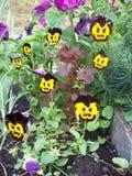 Evil flowers Pansies Royalty Free Stock Photo