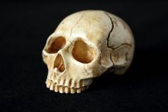 An evil human skull on a black background. An old evil human skull on a black background for halloween stock images