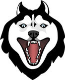 Evil Huskies Stock Images