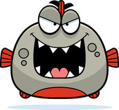 Evil Little Piranha Stock Photography