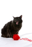 Evil looking cat next to red ball of yarn. Fluffy black cat with mouth open next to a ball of yarn.  Cat looks evil Royalty Free Stock Photos