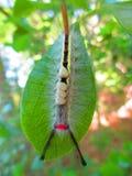 Evil Moth Royalty Free Stock Photos