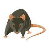 Evil rat. Vector image of a gray evil rat Stock Photography