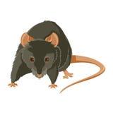 Evil rat. Vector image of a gray evil rat royalty free illustration