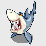 Evil shark with sharp teeth, isolated vector Stock Images