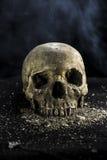 Evil skull. Skull on gravel with smoky background royalty free stock photography
