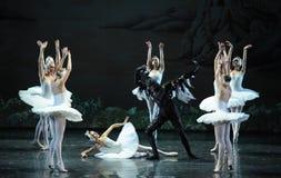 Evil strikes-The last scene of Swan Lake-ballet Swan Lake Royalty Free Stock Image