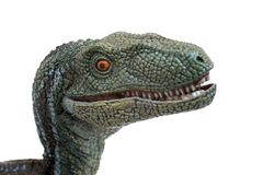 Evil velociraptor on white background. Ready to attack Stock Images