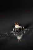 Evill dell'insetto Fotografie Stock Libere da Diritti