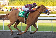 Evita Argentina Wins The La Brea Stakes Royalty Free Stock Images