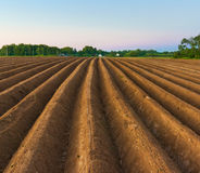 Evnenig scene in countryside. Potatoes field after mechanized hilling Stock Images