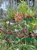 Evocaciones del jardín Fotografía de archivo libre de regalías