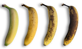 Evolução da banana Fotografia de Stock Royalty Free