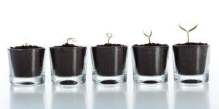Evolução da planta nova - crescimento imagens de stock royalty free