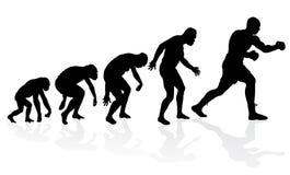 Evolução do pugilista pesado Fotos de Stock Royalty Free