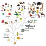 Evolução na biologia, evolução do esquema dos animais isolados no fundo branco a educação das crianças, ciência Escala da evoluçã ilustração do vetor