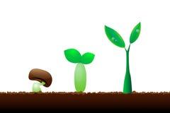 Evolução pouca plântula da planta. Imagem de Stock Royalty Free