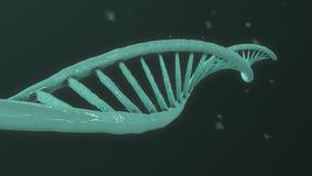 Evolución de la hélice de la DNA ilustración del vector
