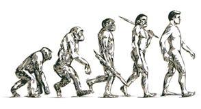 Evolución humana Fotografía de archivo