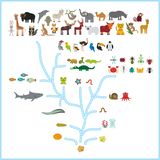 Evolutie in biologie, regelingsevolutie van dieren op witte achtergrond wordt geïsoleerd die kinderen\ 's onderwijs, wetenschap E stock illustratie