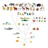 Evolutie in biologie, regelingsevolutie van dieren op witte achtergrond wordt geïsoleerd die kinderen\ 's onderwijs, wetenschap E vector illustratie
