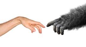 Evolutie en oorsprongsconcept