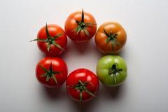 Evolutie van rode tomaat stock foto