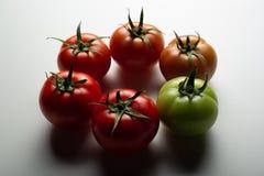 Evolutie van rode tomaat stock foto's