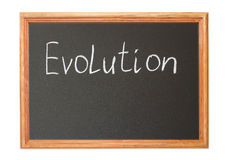 evolution Arkivbild