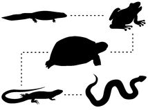 Evolution. Of amphibians and reptiles - vector Stock Image