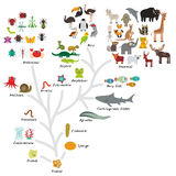 Evolution in biology, scheme evolution of animals isolated on white background. children's education, science. Evolution scale fro. M unicellular organism to Royalty Free Stock Photography