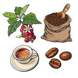 Evolution of coffee from berries to beans and espresso. Sketch style vector illustration isolated on white background. Coffee on branch, in sack and ready for Royalty Free Stock Image