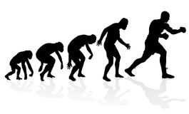 Evolution of the Heavyweight Boxer. Royalty Free Stock Photos