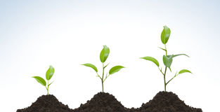 Free Evolution Of A Young Plant Stock Photography - 7384492