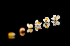 Evolution of Popcorn Royalty Free Stock Photo