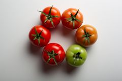 Evolution of red tomato royalty free stock photo