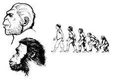 Evolution Stock Image