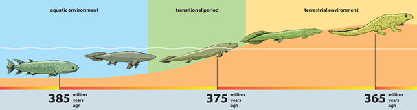 Evolution. Vector illustration of the evolution from fish to reptiles Stock Image