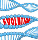 Evolution Word Letters DNA Strand Family Ancestors Genes. Evolution word in red 3d letters in a strand of DNA as a symbol of science and research into the origin Stock Photo