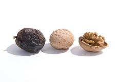 Evoluton of walnuts Stock Image