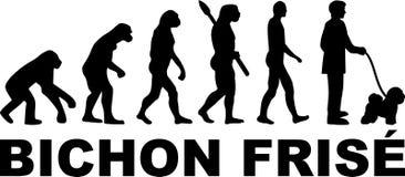 Evoluzione di Bichon Frise Immagini Stock