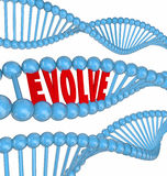 Evolve DNA Word Improve Enhance Get Better Growth. Enhance word in 3d letters in a DNA strand to illustrate growth, enhancement, innovation, progress and Royalty Free Stock Images
