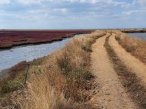 Evros Delta National Park Royalty Free Stock Images