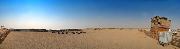 Ewes And goats farm out jeddah royalty free stock photo
