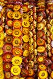 Ewig Blume Lizenzfreies Stockfoto