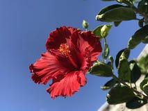 Ewige Blume stockfotos