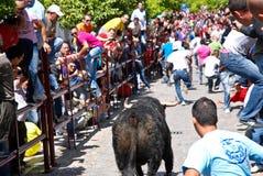 Exécution avec Bull en La Frontera d'Arcos De Photographie stock