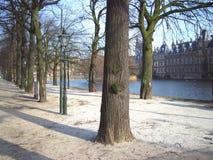 Exército da árvore Fotos de Stock Royalty Free