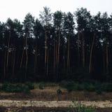 Exército das árvores Foto de Stock